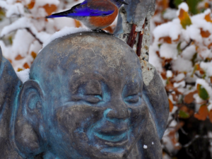 Zen And The Bluebird Of Happiness